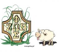 owieczka z Oazy / Oaza