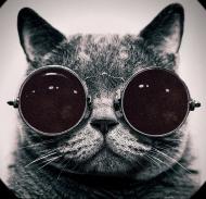 Koszulka męska - Kot ver.1