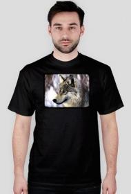 Koszulka z wilkiem - męska