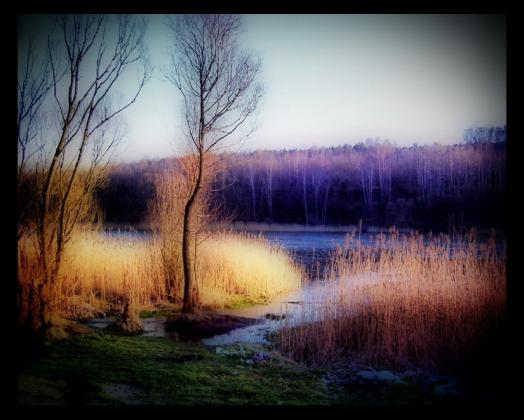 Bajkowy las