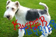 Kacper Terrier - kubek