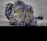 Kubek z oficjalnym tygrysem kanału