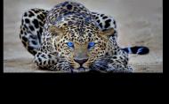 Otwieracz z oficjalnym tygrysem kanału