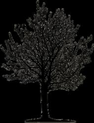 Podkładka drzewo