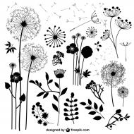 dzikie kwiaty - biała