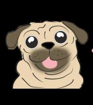 Szczęśliwy - mops