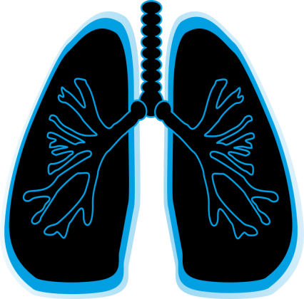 Lungs M1