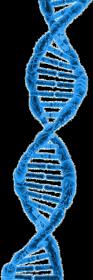 Koszulka damska - helisa DNA
