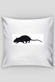 sweet dreams rat