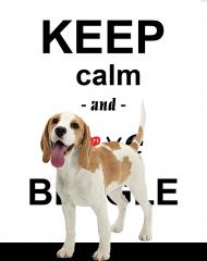Love Beagle- Damska