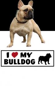Bulldog-Damska