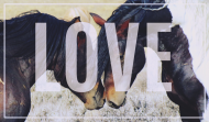 Ekotorba LOVE